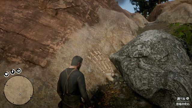 カルメット峡谷の化石
